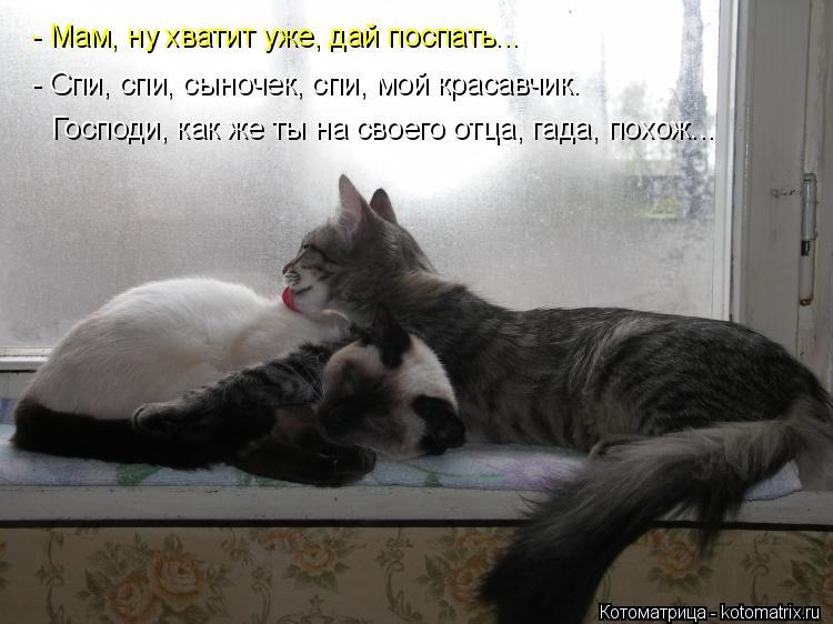 Котоматрица: - Мам, ну хватит уже, дай поспать... - Спи, спи, сыночек, спи, мой красавчик. Господи, как же ты на своего отца, гада, похож...