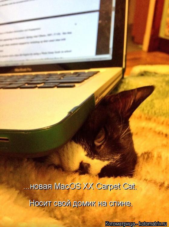 Котоматрица: ...новая MacOS XX Carpet Cat. Носит свой домик на спине.