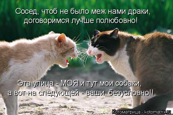 Котоматрица: Сосед, чтоб не было меж нами драки, договоримся лучше полюбовно! Эта улица - МОЯ и тут мои собаки, а вот на следующей - ваши, безусловно!!