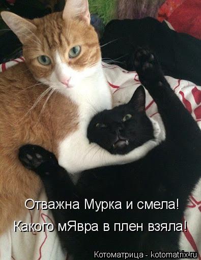 http://kotomatrix.ru/images/lolz/2014/10/22/kotomatritsa_E.jpg