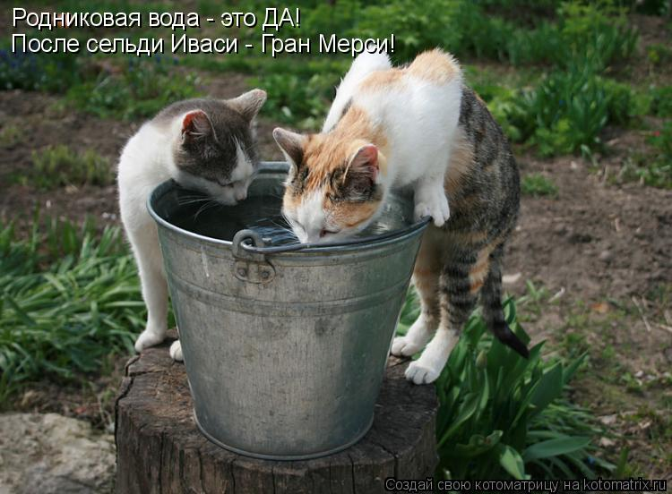 Котоматрица: Родниковая вода - это ДА! После сельди Иваси - Гран Мерси!