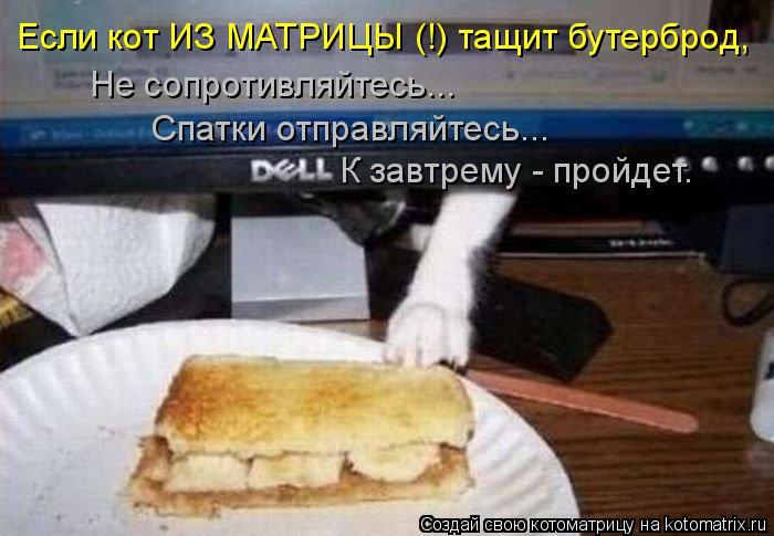 Котоматрица: Если кот ИЗ МАТРИЦЫ (!) тащит бутерброд, Не сопротивляйтесь... Спатки отправляйтесь... К завтрему - пройдет.
