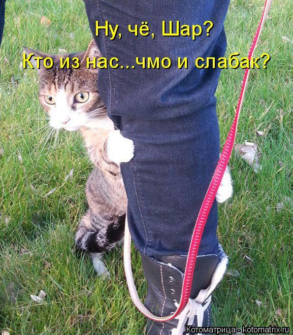 http://kotomatrix.ru/images/lolz/2014/10/22/kotomatritsa_XG.jpg