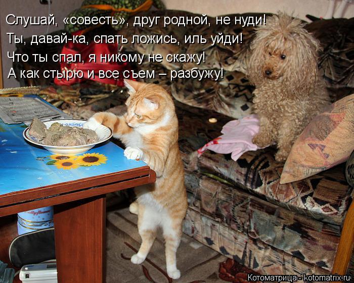 Котоматрица: Слушай, «совесть», друг родной, не нуди! Ты, давай-ка, спать ложись, иль уйди! Что ты спал, я никому не скажу! А как стырю и все съем – разбужу!
