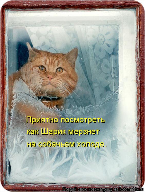 Котоматрица: Приятно посмотреть как Шарик мерзнет на собачьем холоде.