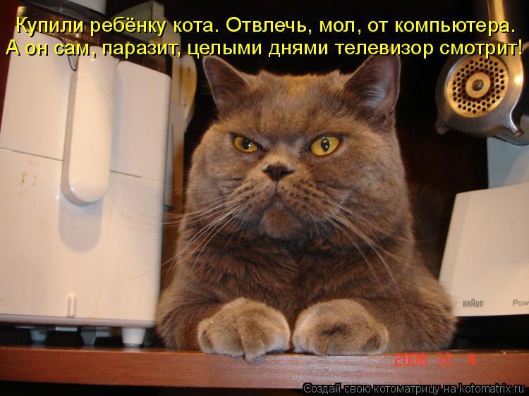 Котоматрица: Купили ребёнку кота. Отвлечь, мол, от компьютера. А он сам, паразит, целыми днями телевизор смотрит!
