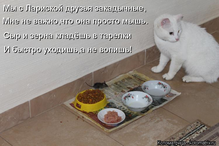 Котоматрица: Мы с Лариской друзья закадычные, Мне не важно,что она просто мышь. Сыр и зерна кладёшь в тарелки И быстро уходишь,а не вопишь!