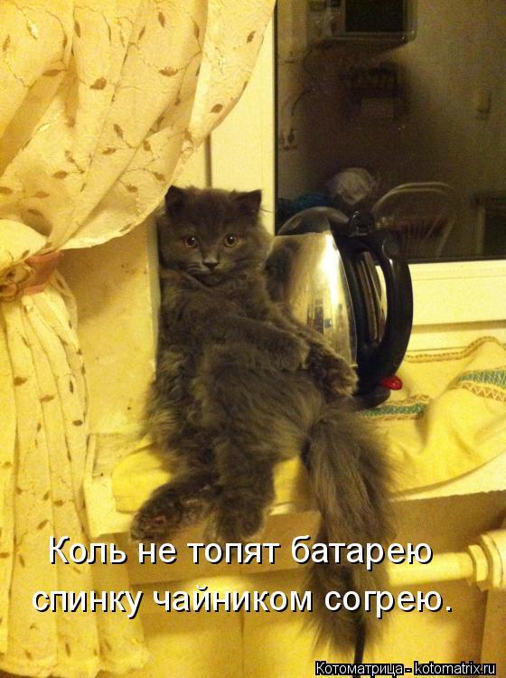 Котоматрица: Коль не топят батарею  спинку чайником согрею.
