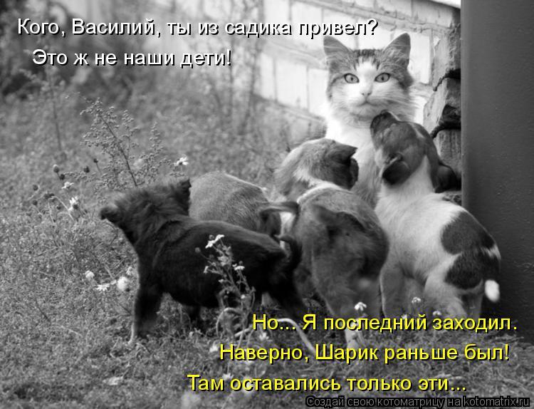 Котоматрица: Кого, Василий, ты из садика привел? Это ж не наши дети! Но... Я последний заходил.  Наверно, Шарик раньше был! Там оставались только эти...