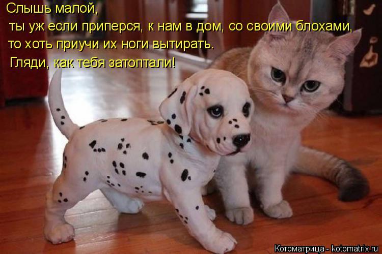 http://kotomatrix.ru/images/lolz/2014/10/24/kotomatritsa_gM.jpg