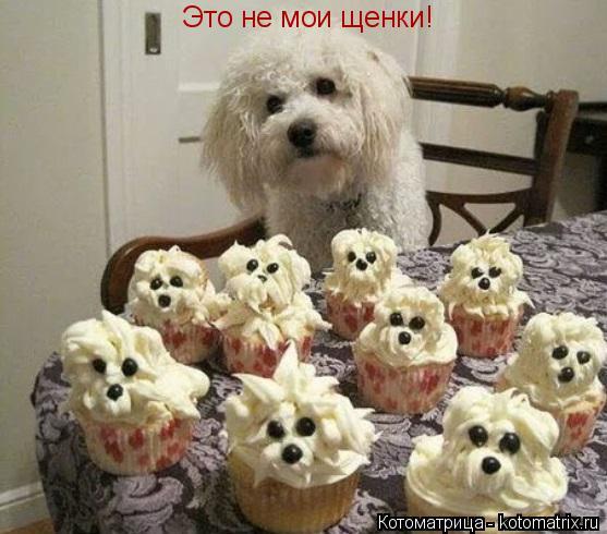Котоматрица: Это не мои щенки!