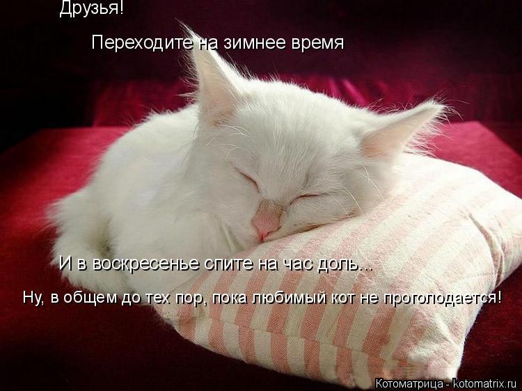 Котоматрица: Друзья! Переходите на зимнее время И в воскресенье спите на час доль... Ну, в общем до тех пор, пока любимый кот не проголодается!