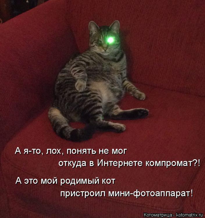 Котоматрица: А я-то, лох, понять не мог откуда в Интернете компромат?! А это мой родимый кот пристроил мини-фотоаппарат!