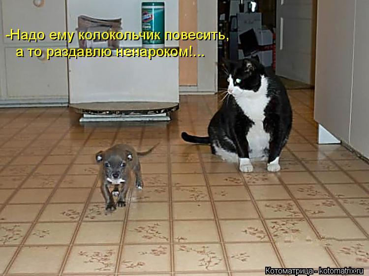 Котоматрица: -Надо ему колокольчик повесить, а то раздавлю ненароком!...