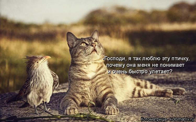 Котоматрица: -Господи, я так люблю эту птичку, почему она меня не понимает и очень быстро улетает?