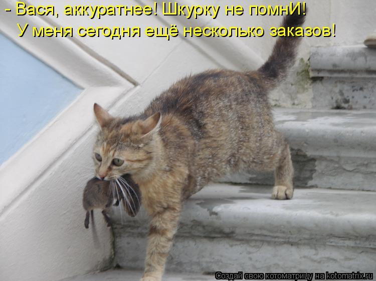 http://kotomatrix.ru/images/lolz/2014/10/26/kotomatritsa_dL.jpg