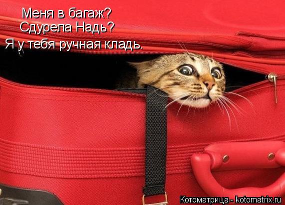 Котоматрица: Меня в багаж? Сдурела Надь? Я у тебя ручная кладь.