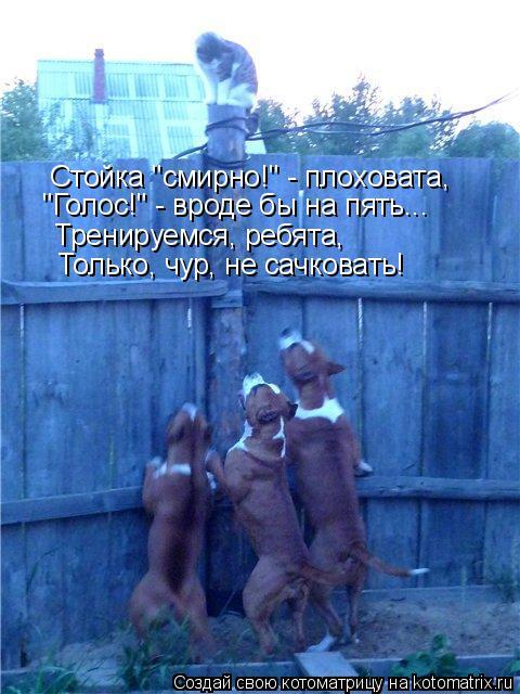 """Котоматрица: Стойка """"смирно!"""" - плоховата, """"Голос!"""" - вроде бы на пять... Тренируемся, ребята, Только, чур, не сачковать!"""