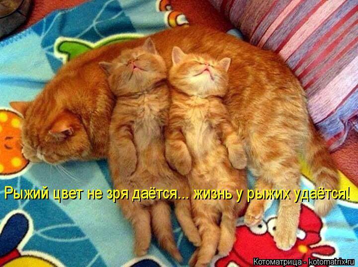 Котоматрица: Рыжий цвет не зря даётся... жизнь у рыжих удаётся!