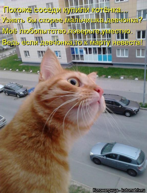 http://kotomatrix.ru/images/lolz/2014/10/28/kotomatritsa_ox.jpg