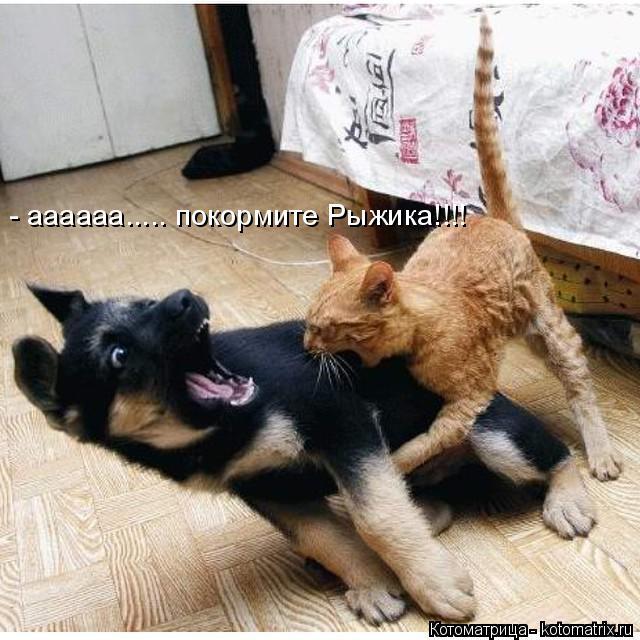 Котоматрица: - аааааа..... покормите Рыжика!!!!