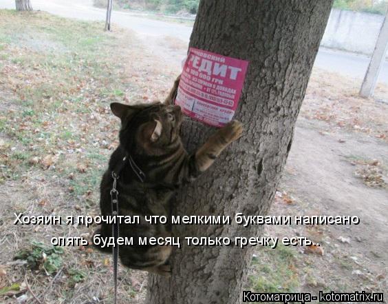 Котоматрица: Хозяин я прочитал что мелкими буквами написано опять будем месяц только гречку есть..