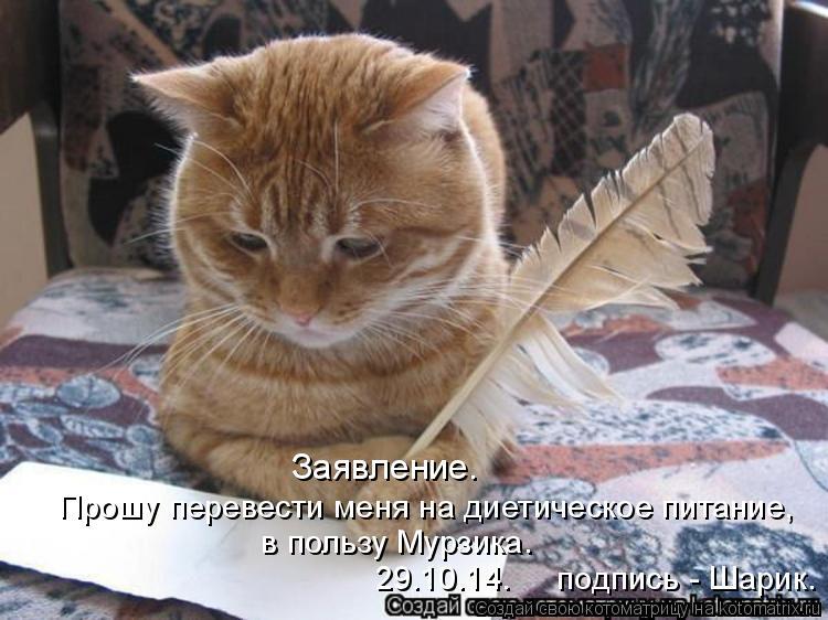 Котоматрица: Заявление.  в пользу Мурзика. Прошу перевести меня на диетическое питание, 29.10.14.     подпись - Шарик.