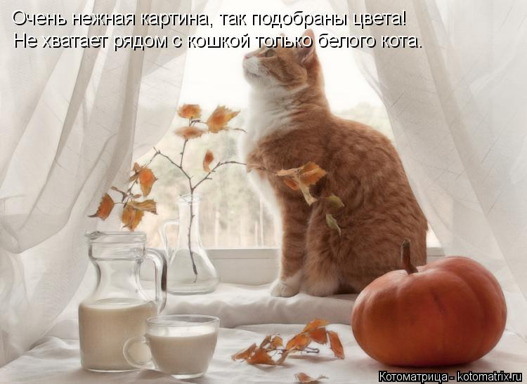 Котоматрица: Очень нежная картина, так подобраны цвета! Не хватает рядом с кошкой только белого кота.