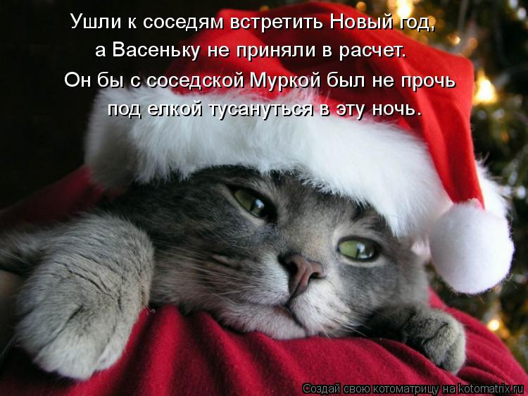 Котоматрица: Он бы с соседской Муркой был не прочь под елкой тусануться в эту ночь. Ушли к соседям встретить Новый год, а Васеньку не приняли в расчет.