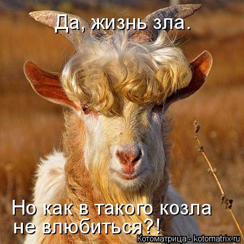 Котоматрица: Да, жизнь зла. Но как в такого козла не влюбиться?!