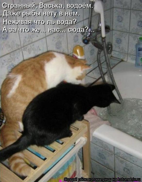 Котоматрица: Странный, Васька, водоём.  Даже рыбы нету в нём. Неживая что ль вода? А за что же... нас... сюда?...