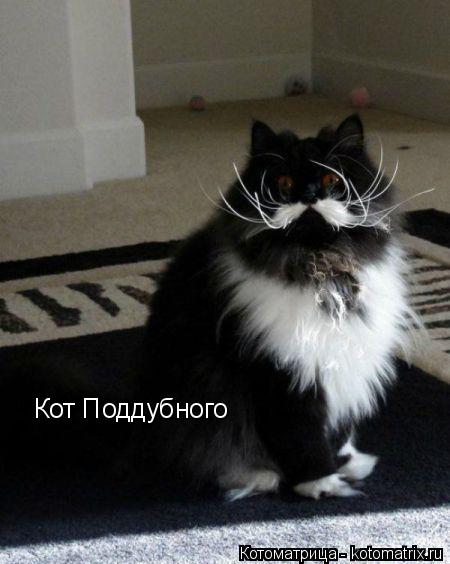Котоматрица: Кот Поддубного