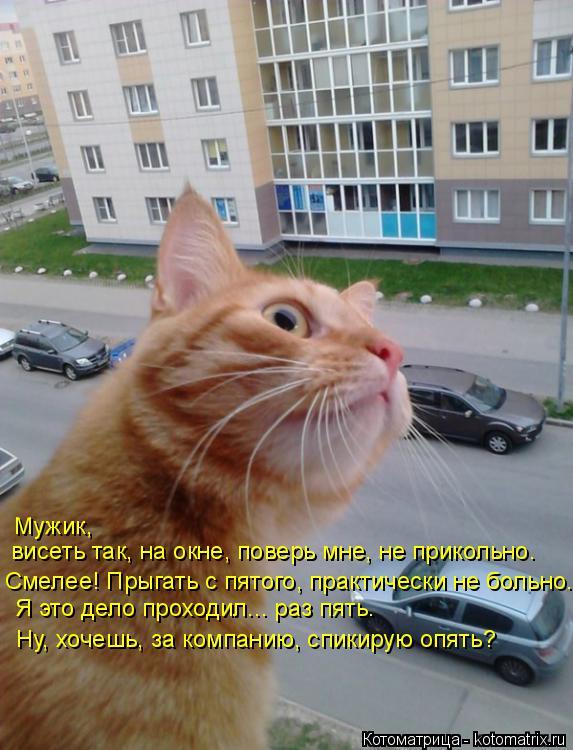 Котоматрица: Мужик,  висеть так, на окне, поверь мне, не прикольно. Смелее! Прыгать с пятого, практически не больно.  Я это дело проходил... раз пять. Ну, хоче