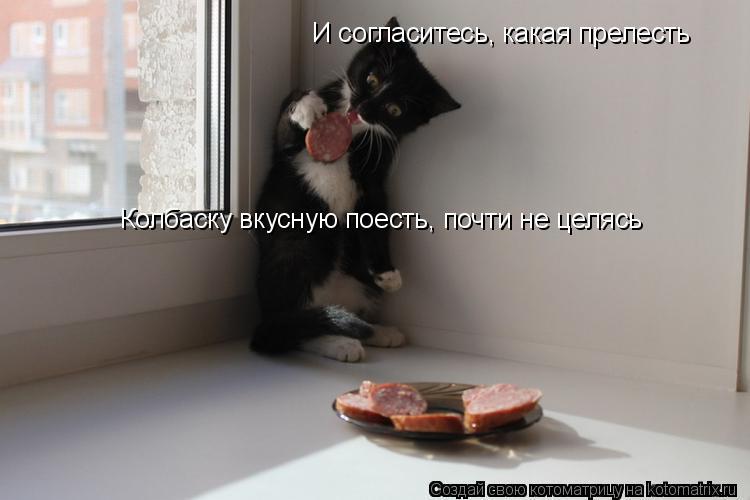 Котоматрица: И согласитесь, какая прелесть Колбаску вкусную поесть, почти не целясь