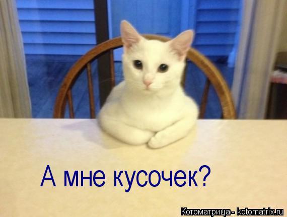 Котоматрица: А мне кусочек?