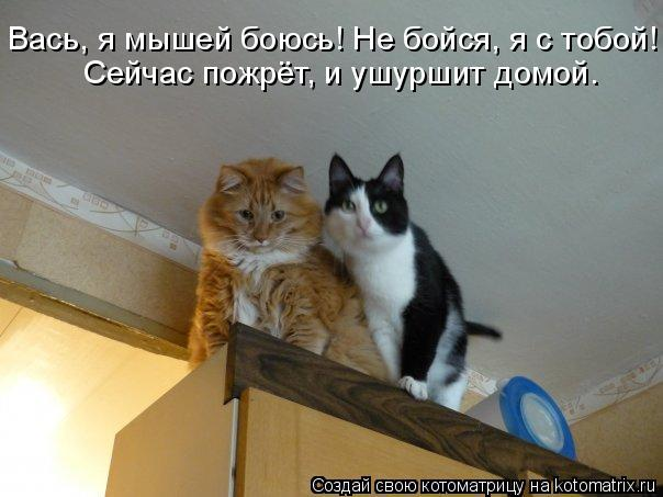 Котоматрица: Вась, я мышей боюсь! Не бойся, я с тобой! Сейчас пожрёт, и ушуршит домой.