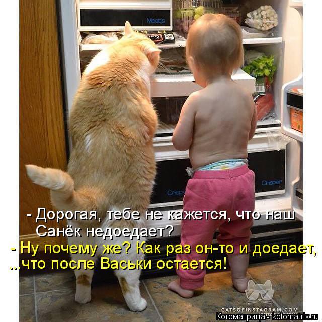 Котоматрица: - Дорогая, тебе не кажется, что наш Санёк недоедает? - Ну почему же? Как раз он-то и доедает, ...что после Васьки остается!