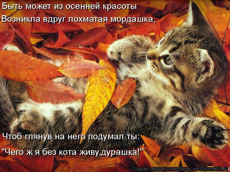 """Котоматрица: Быть может из осенней красоты Возникла вдруг лохматая мордашка, Чтоб глянув на него подумал ты: """"Чего ж я без кота живу,дурашка!"""""""