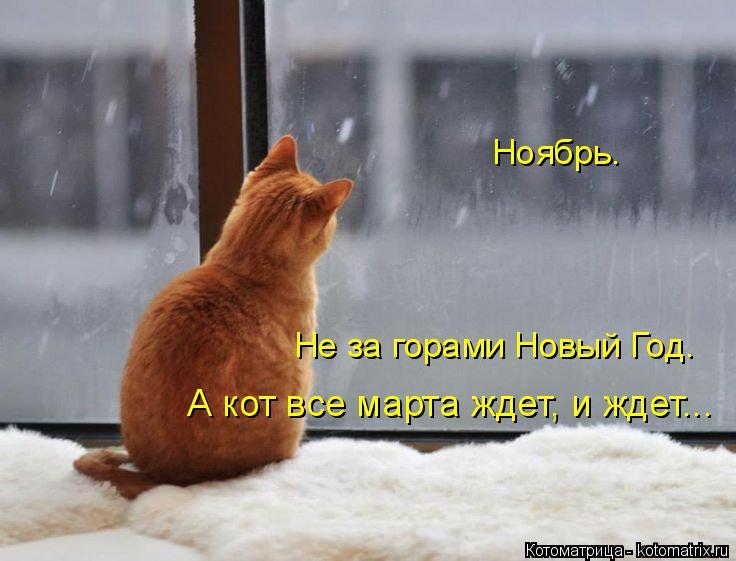 Котоматрица: Ноябрь. А кот все марта ждет, и ждет... Не за горами Новый Год.
