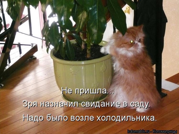 Котоматрица: Зря назначил свидание в саду. Надо было возле холодильника. Не пришла...