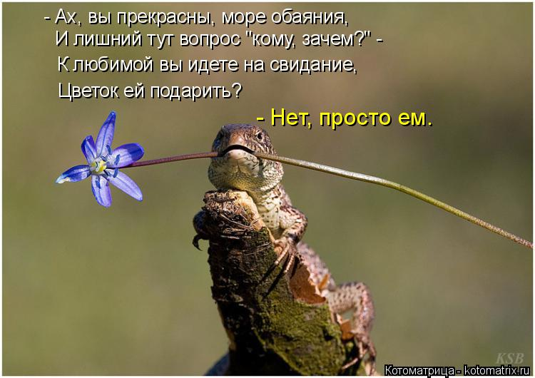"""Котоматрица: - Ах, вы прекрасны, море обаяния, И лишний тут вопрос """"кому, зачем?"""" - К любимой вы идете на свидание, Цветок ей подарить? - Нет, просто ем."""