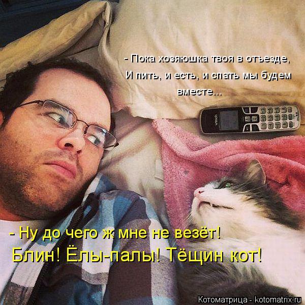 Котоматрица: - Ну до чего ж мне не везёт! Блин! Ёлы-палы! Тёщин кот! - Пока хозяюшка твоя в отъезде, И пить, и есть, и спать мы будем  вместе...