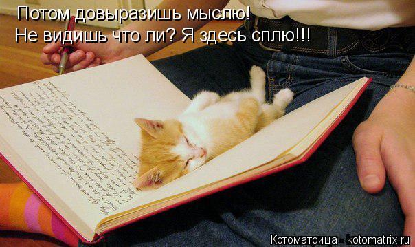 Котоматрица: Потом довыразишь мыслю! Не видишь что ли? Я здесь сплю!!!