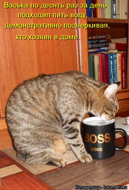 Котоматрица: Васька по десять раз за день  подходил пить воду, демонстративно подчеркивая, кто хозяин в доме.