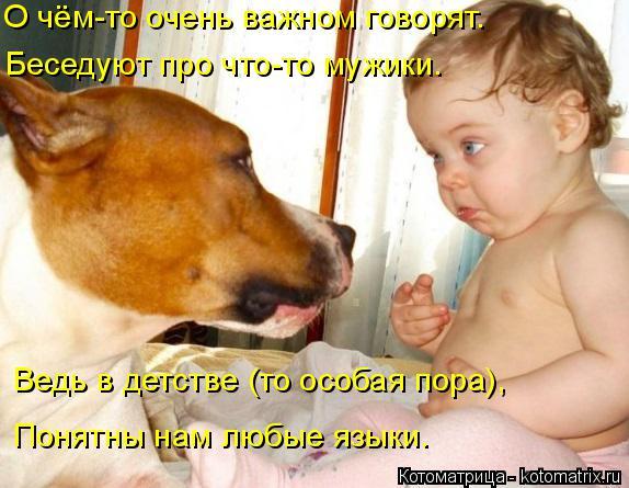 http://kotomatrix.ru/images/lolz/2014/11/02/kotomatritsa_X.jpg