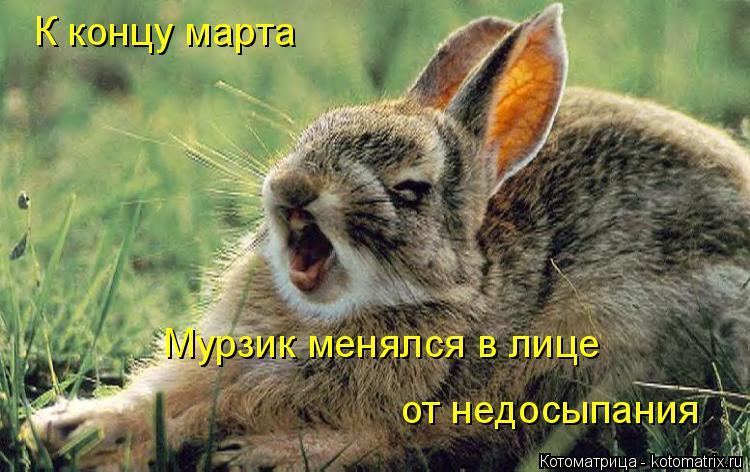 http://kotomatrix.ru/images/lolz/2014/11/02/kotomatritsa_Z.jpg