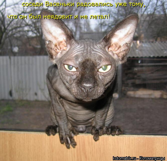 http://kotomatrix.ru/images/lolz/2014/11/02/kotomatritsa_i.jpg