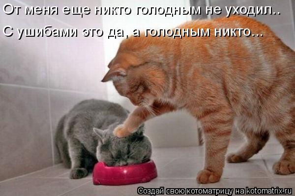 Котоматрица: От меня еще никто голодным не уходил.. С ушибами это да, а голодным никто...