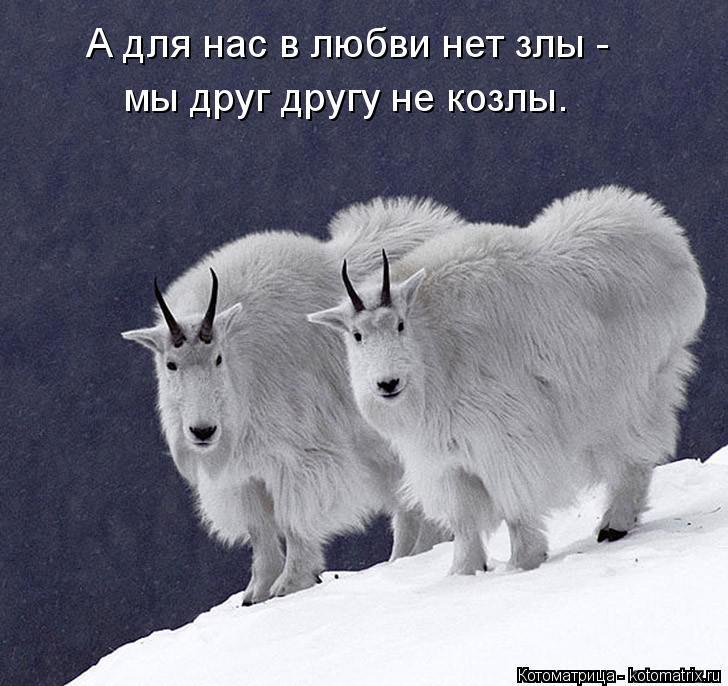 Котоматрица: А для нас в любви нет злы -  мы друг другу не козлы.