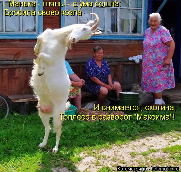 """Котоматрица: - Манька - глянь! - с ума сошла: Бросила свово козла И снимается, скотина, Топлесс в разворот """"Максима""""!"""